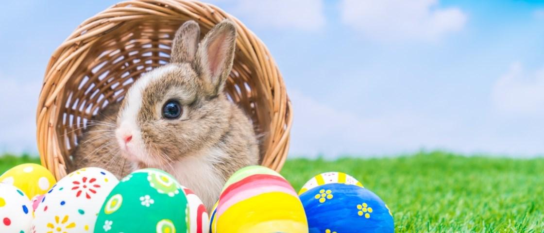 8 ideias para divertir as crianças na Páscoa
